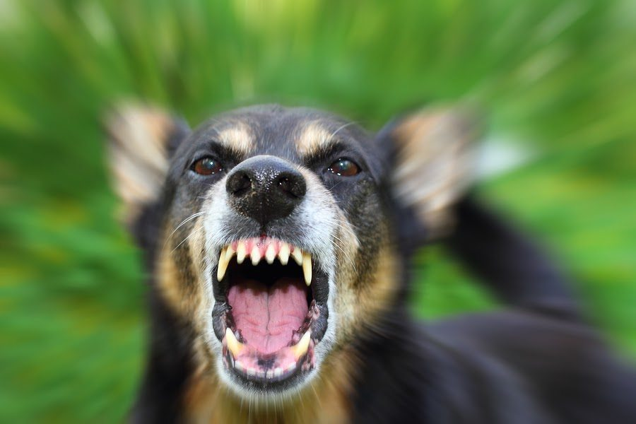 Dallas Dog Bite Injury Attorneys