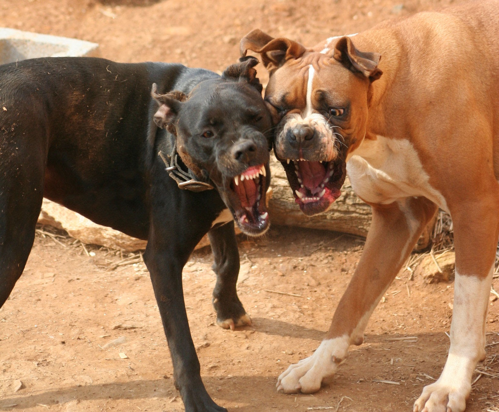 dallas tx personal injury lawyers - Who Pays for Dog Bite Injuries in Texas?